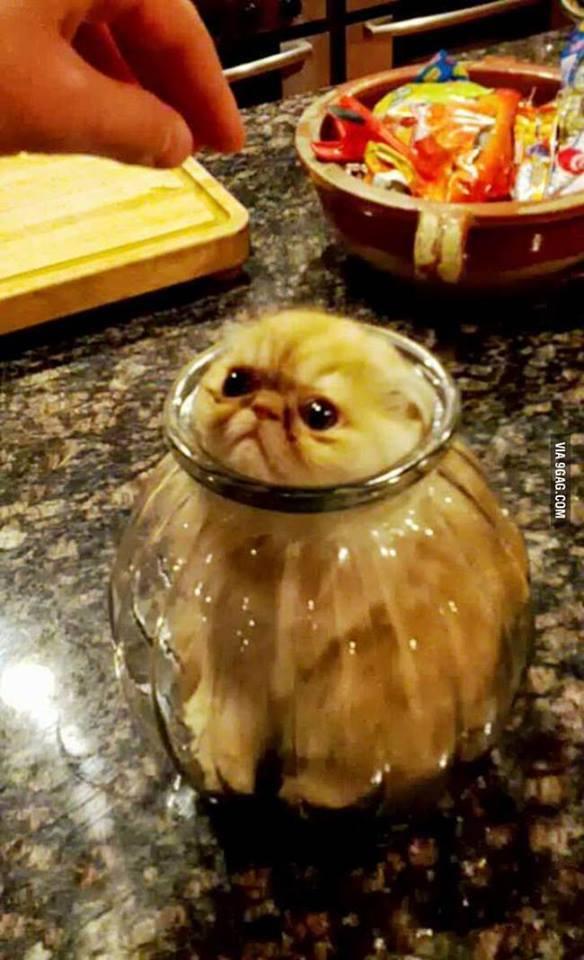 Cute Kitten inside the transparent pot