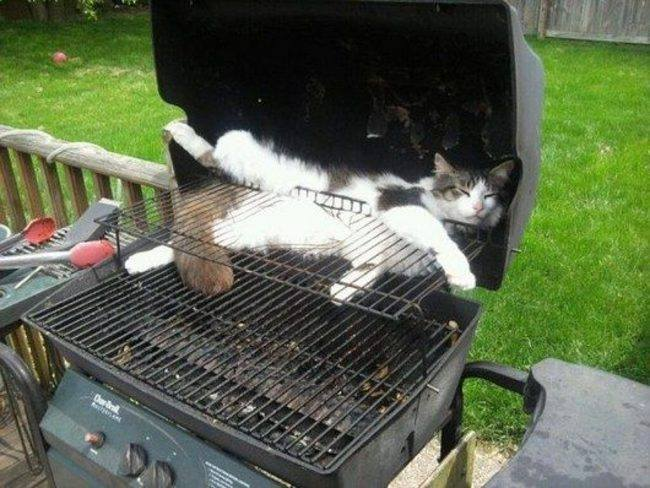 Lazy cat sleeping on a Grill Machine