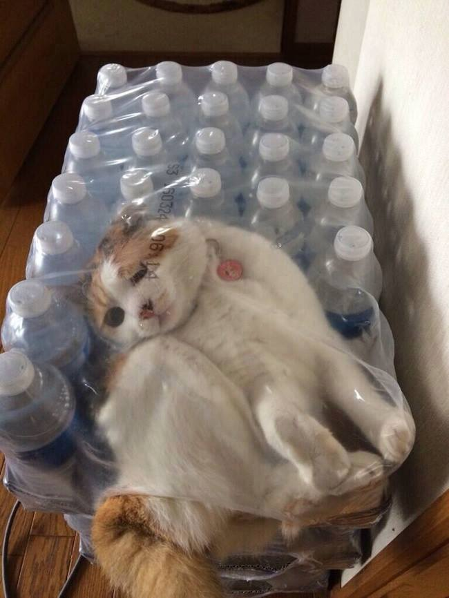 Get Free Kitty with a new pack of Mineral Bottles
