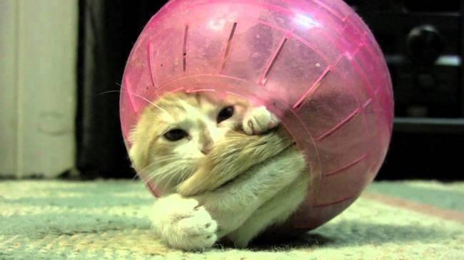 Cat enjoying rolling sitting inside a Circular Bowl
