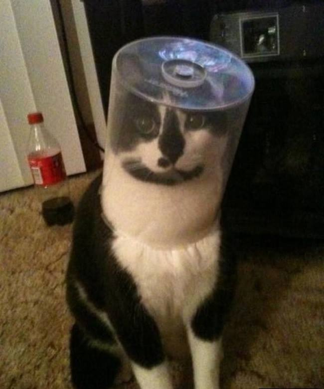 Innocent Cat planning to go on space wearing Space Helmet