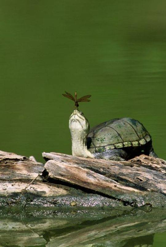 These 8 Unique Postures of Turtle will make you fall in love with them